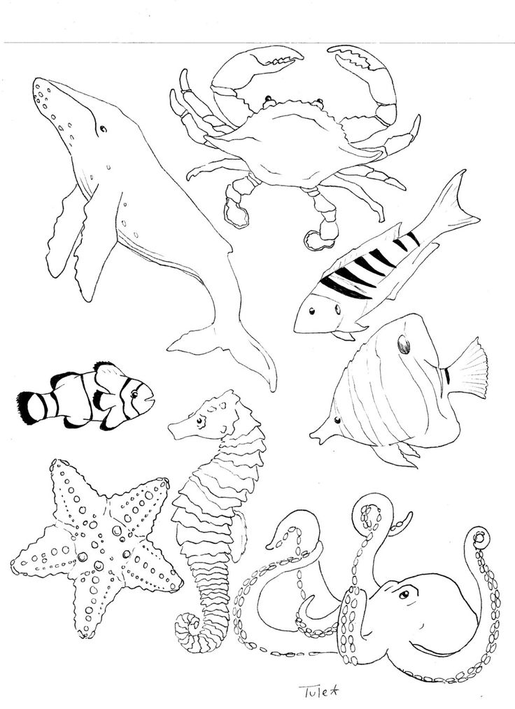 coloring pages of sea life sea life coloring page natural history museum pinterest pages sea life of coloring