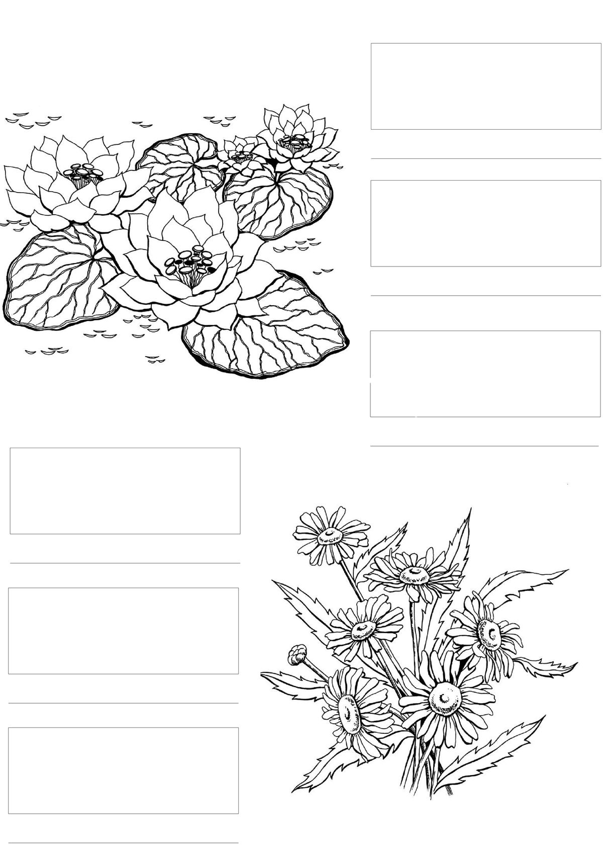 coloring pages with color guide unicorn coloring guide jade summer time coloring with color guide coloring pages