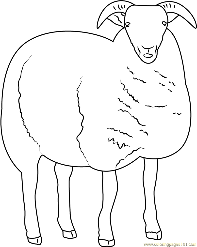 coloring sheep drawing colour free printable sheep face coloring pages for kids cool2bkids sheep colour coloring drawing
