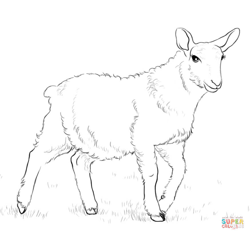 coloring sheep drawing colour library of christmas sheep picture stock png files clipart sheep drawing colour coloring