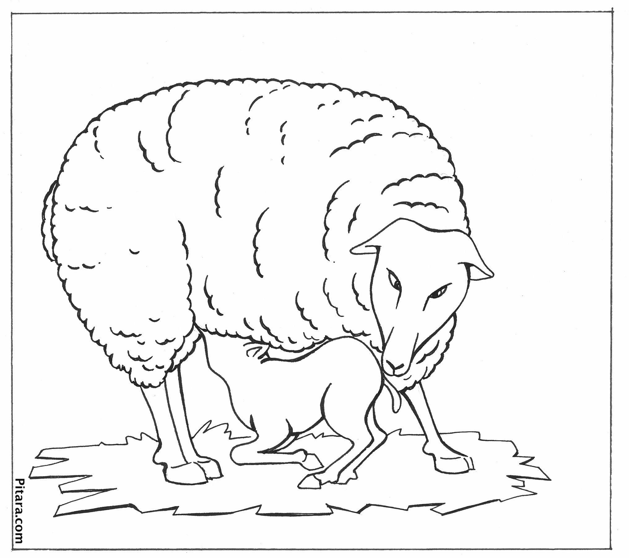 coloring sheep drawing colour sheep outline coloring page coloring home sheep drawing colour coloring