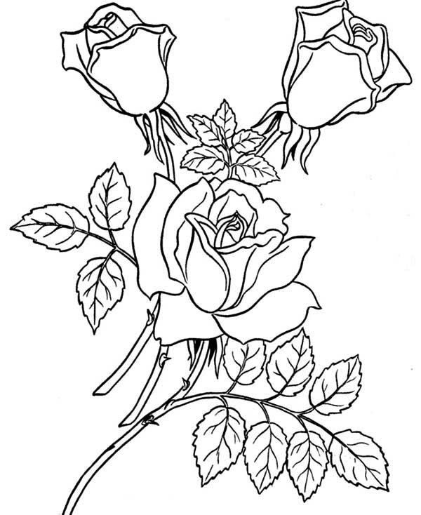 coloring sheet rose printable rose coloring pages for kids cool2bkids rose coloring sheet