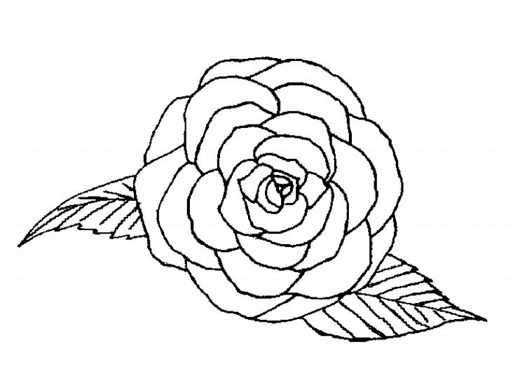 coloring sheet rose roses coloring pages getcoloringpagescom rose coloring sheet