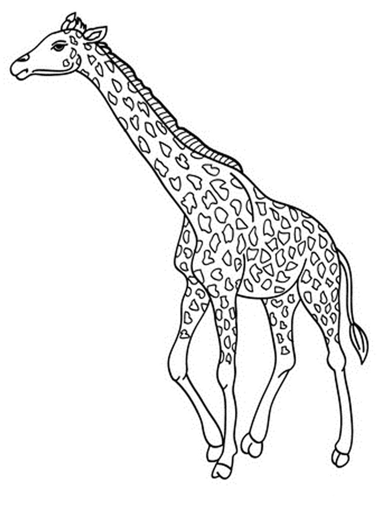 colouring pages of giraffe animal coloring pages giraffe at getdrawings free download of giraffe colouring pages