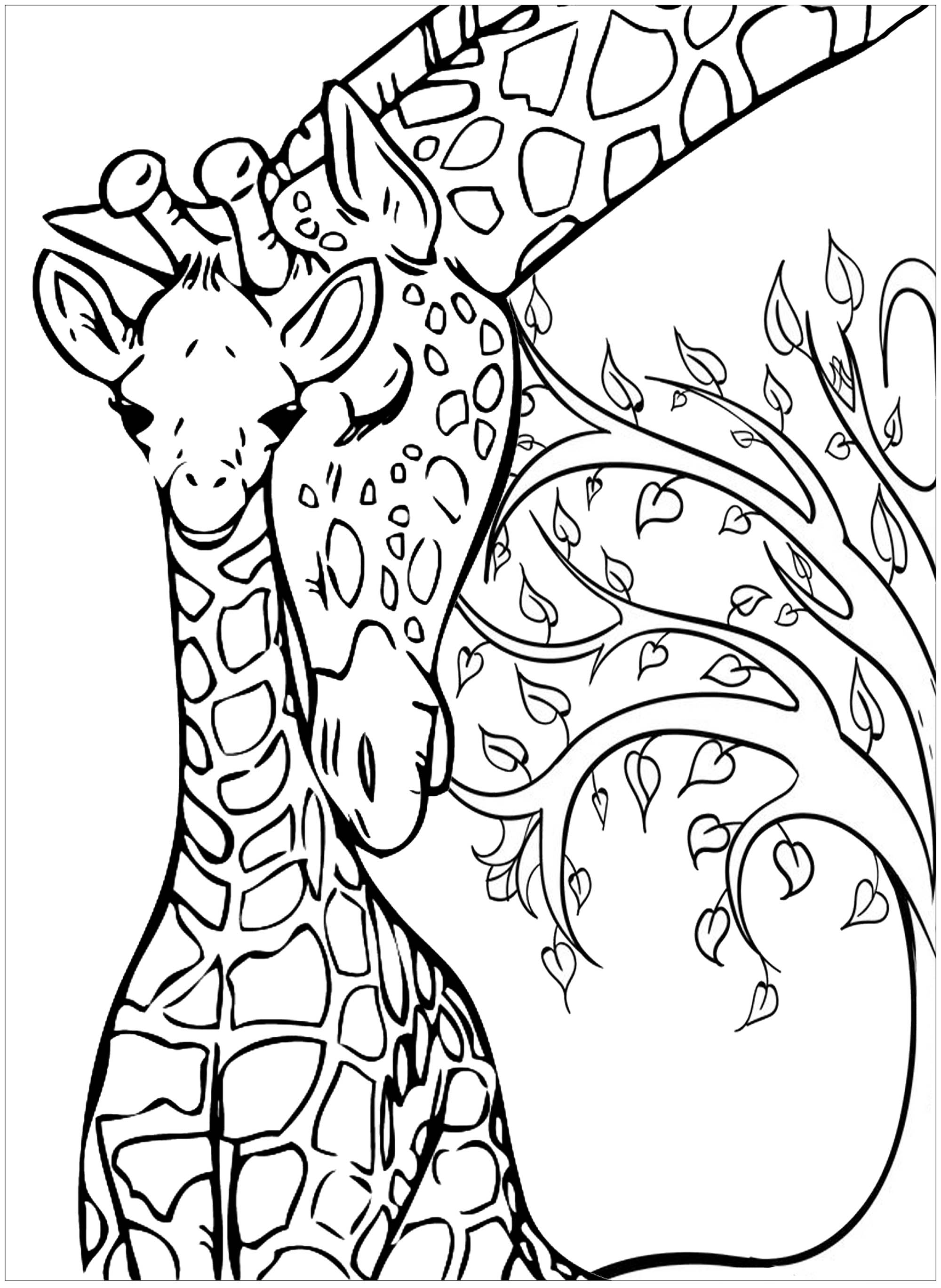 colouring pages of giraffe baby giraffe and his mother giraffes adult coloring pages giraffe pages colouring of