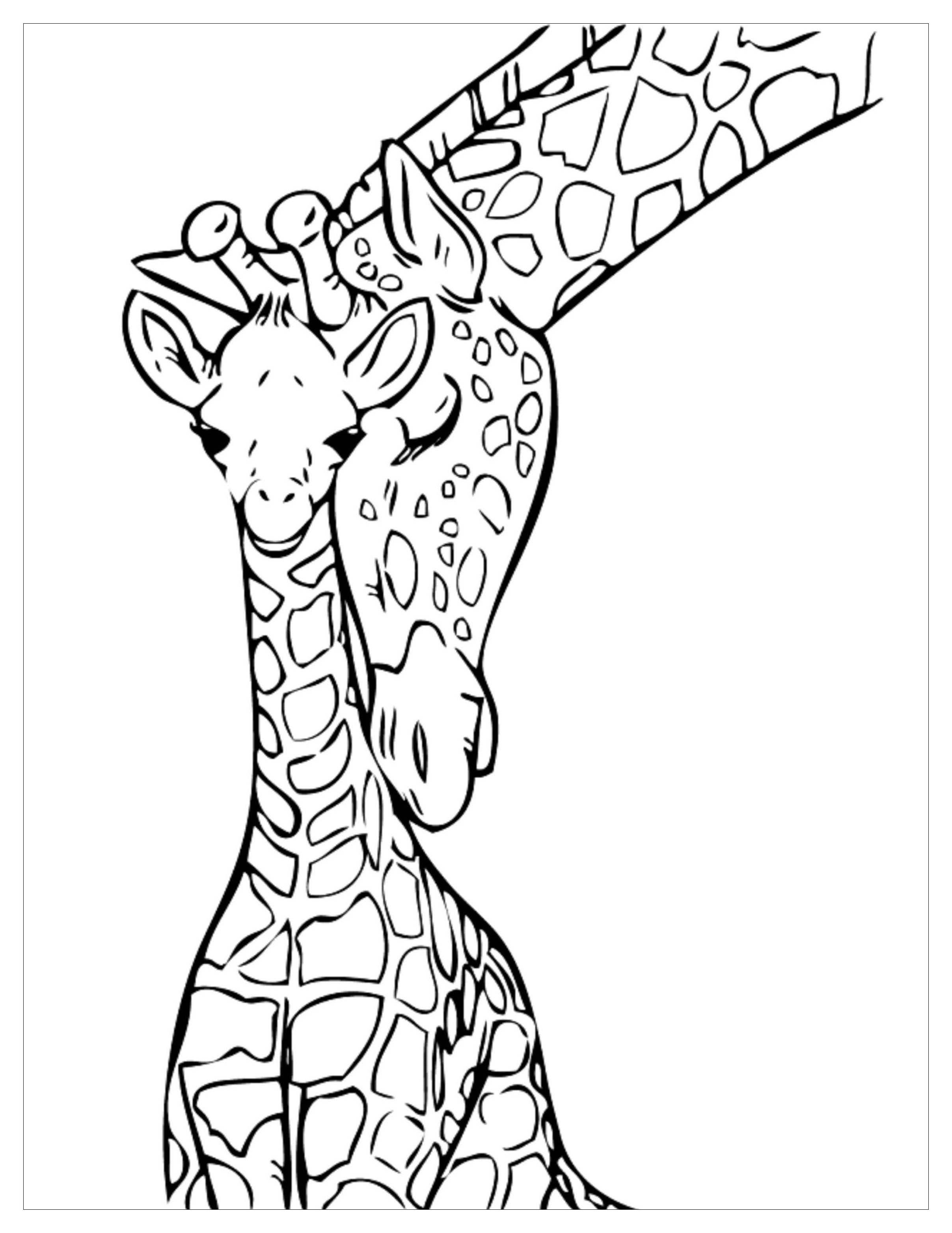 colouring pages of giraffe free giraffe coloring pages pages giraffe of colouring