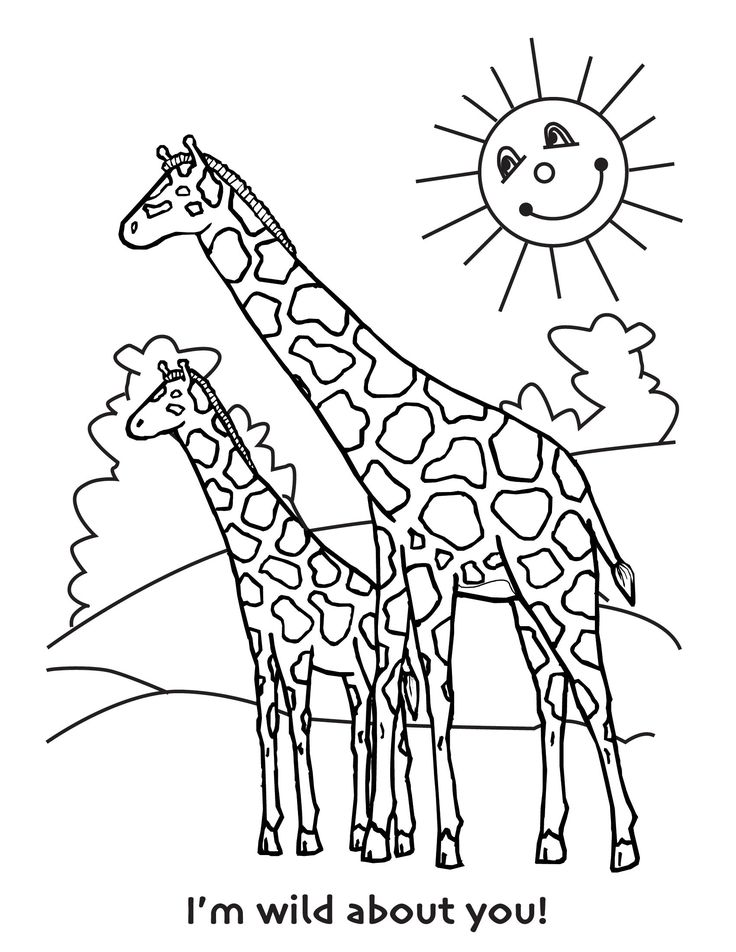 colouring pages of giraffe free printable giraffe coloring pages for kids giraffe pages of giraffe colouring