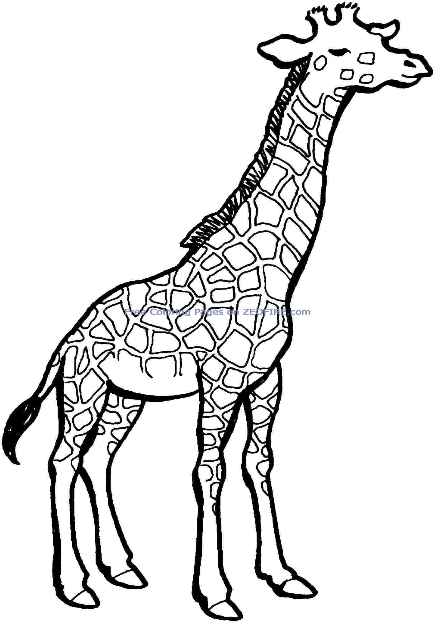 colouring pages of giraffe giraffe coloring pages free download on clipartmag pages colouring of giraffe