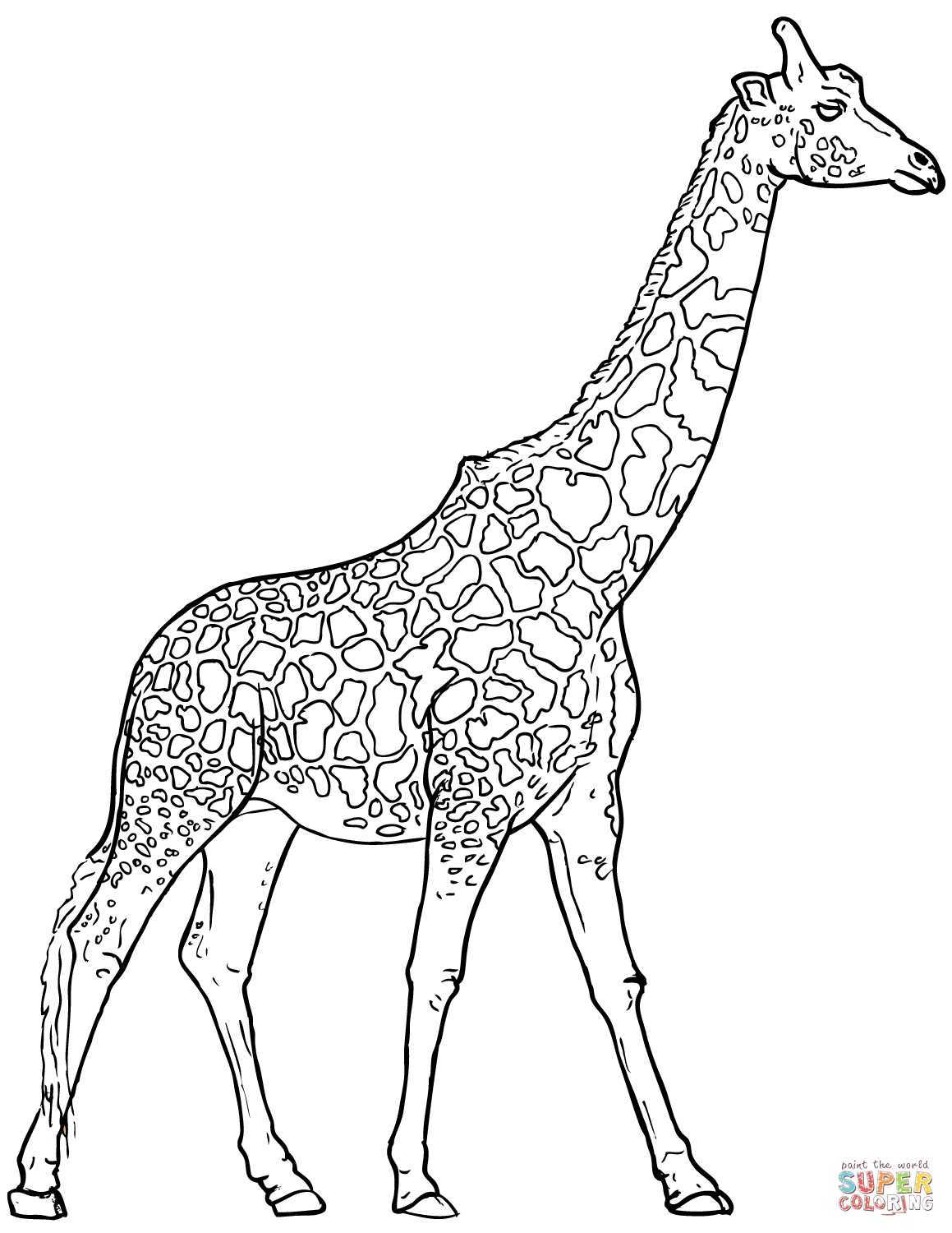 colouring pages of giraffe giraffe drawing outline at getdrawings free download giraffe colouring pages of