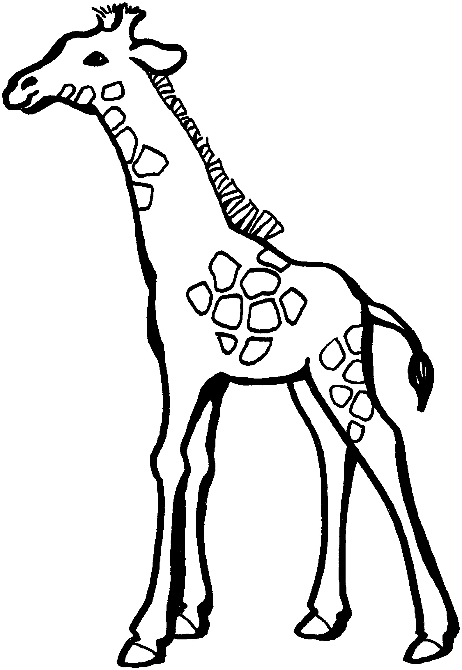 colouring pages of giraffe giraffes for kids giraffes kids coloring pages colouring pages giraffe of
