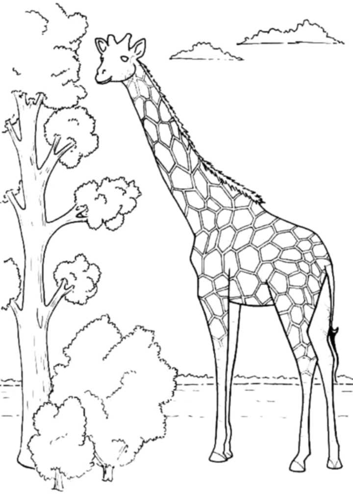 colouring pages of giraffe print download giraffe coloring pages for kids to have fun colouring pages of giraffe