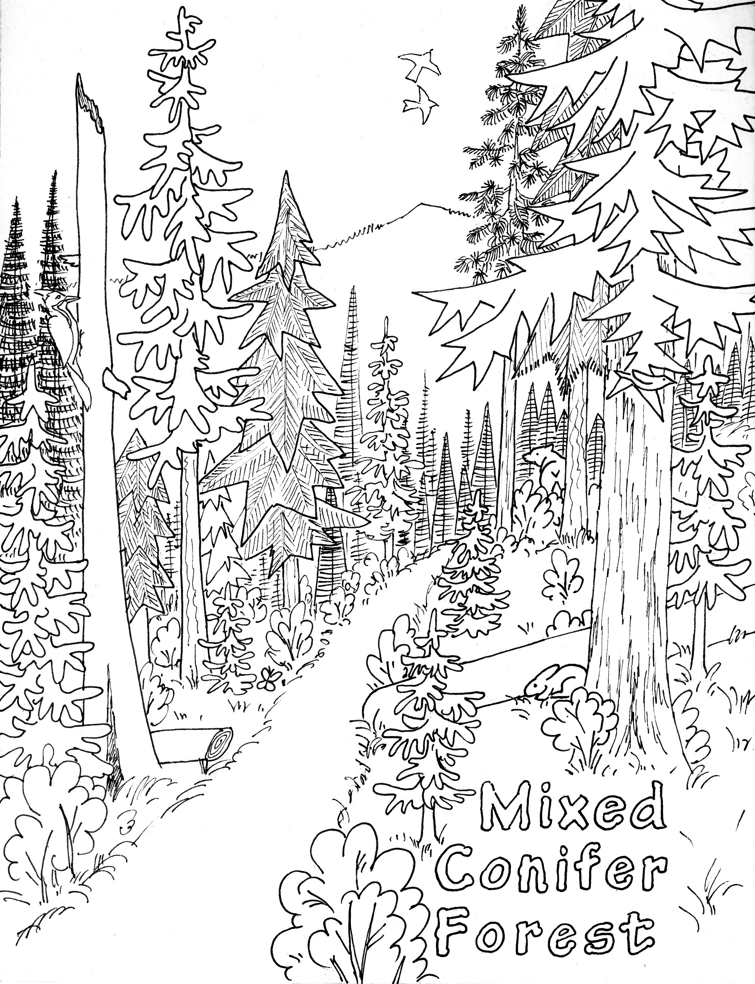 colouring pages of nature forest 32 nature printable coloring pages colouring pages nature of