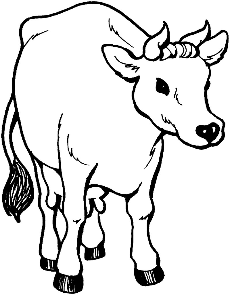 cow coloring pics cartoon cow coloring pages at getdrawings free download coloring pics cow