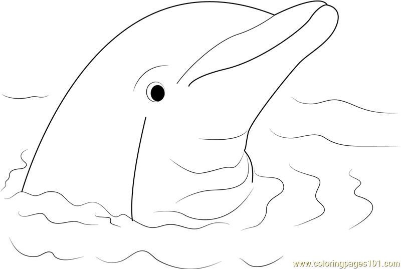 cute hard dolphin coloring pages dolphin coloring page dolphin coloring pages 6 strange coloring cute hard pages dolphin