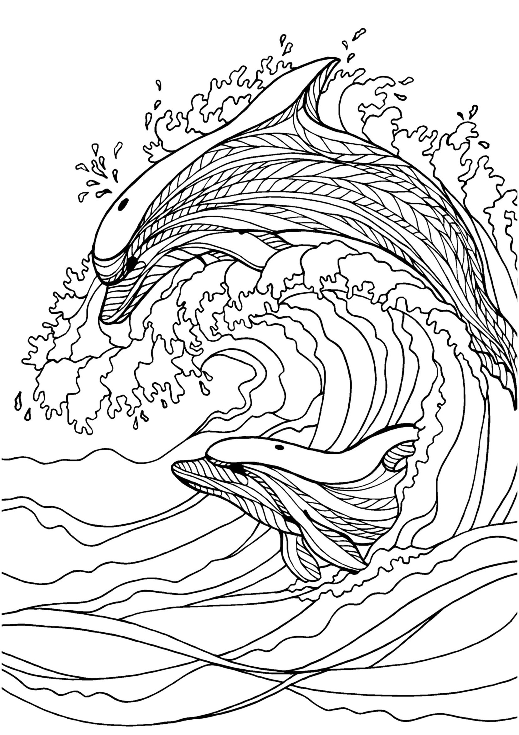 cute hard dolphin coloring pages dolphin coloring pages hard color and drawing dolphin coloring pages hard cute