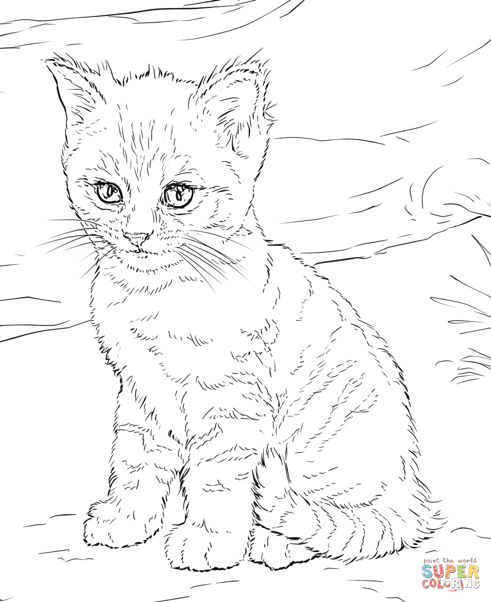 cute kitten colouring pages cute kitten in basket of shamrock coloring page free colouring cute pages kitten
