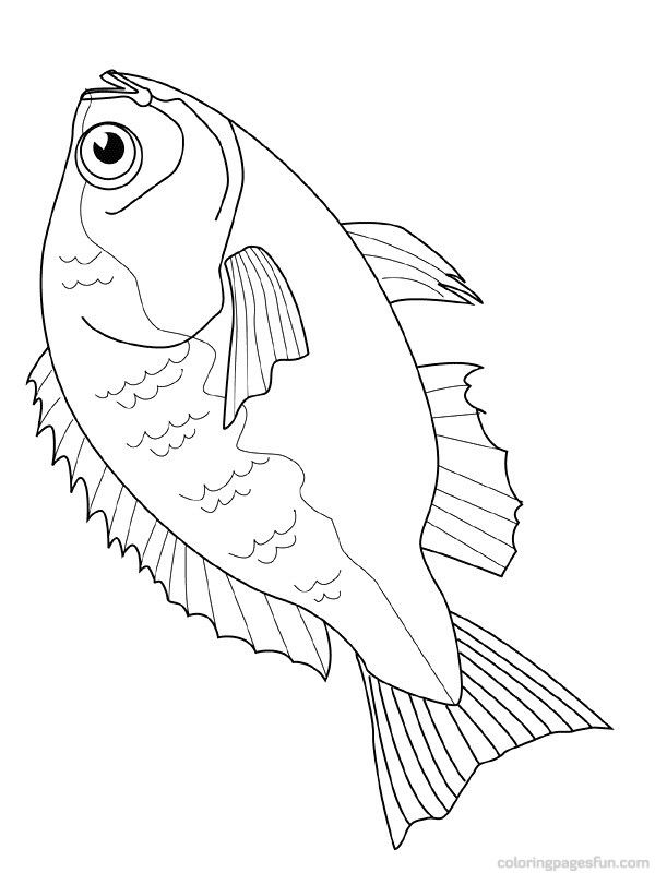 dead fish coloring pages cartoon dead fish free download clip art on jpg 4 clipartix dead coloring fish pages