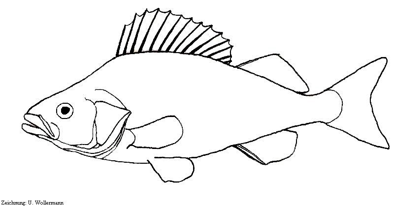 dead fish coloring pages cat staring at dead fish coloring page coloring sun dead pages fish coloring