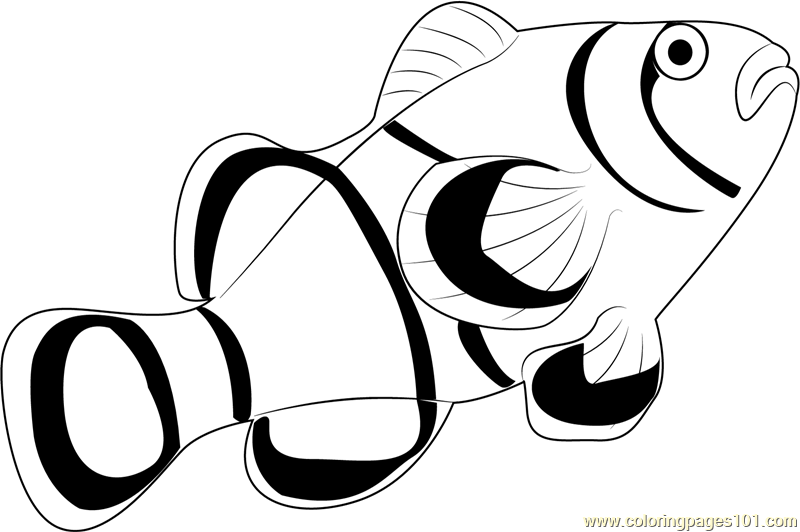 dead fish coloring pages dead fish clipart clipground fish pages coloring dead