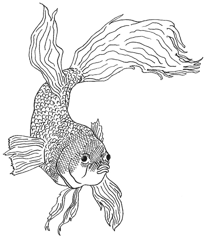 dead fish coloring pages dead fish drawing at getdrawings free download coloring fish dead pages
