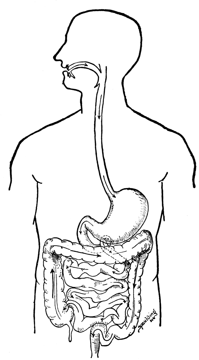 digestive system coloring pages digestive tract coloring page elementary coloring pages system coloring digestive