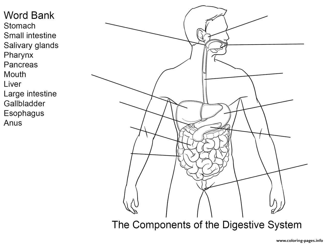 digestive system coloring pages digestive tract organs coloring middle school digestive pages coloring system