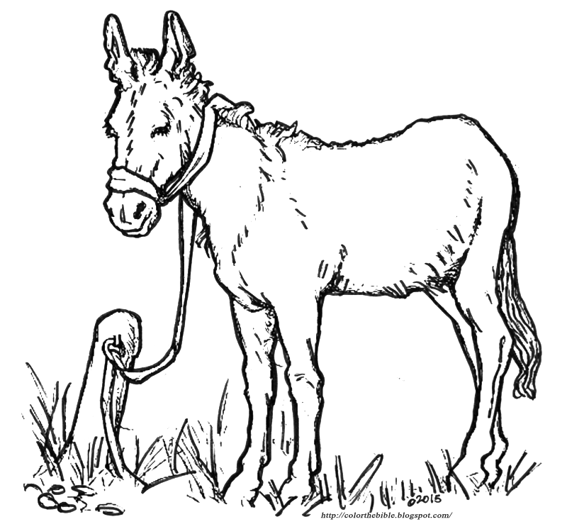 donkey colouring pages donkey coloring pages to download and print for free colouring donkey pages