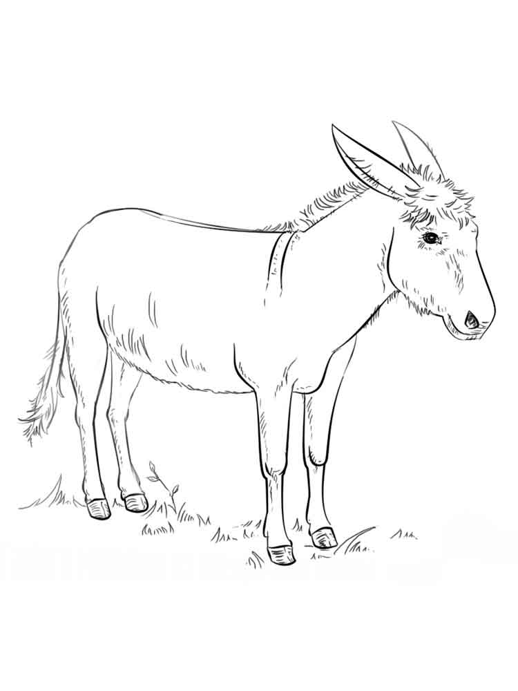 donkey colouring pages free donkey coloring pages download and print donkey donkey colouring pages