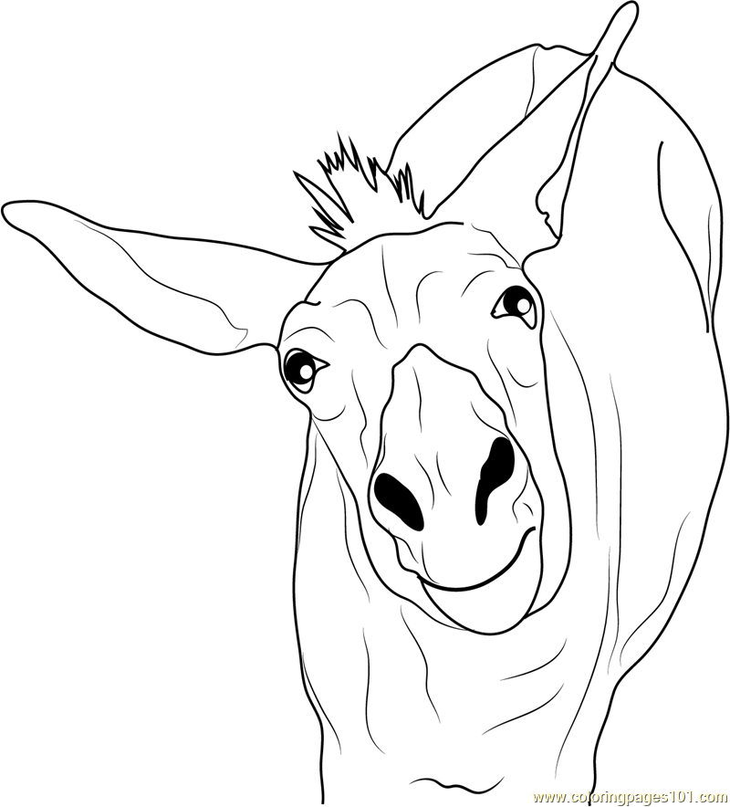donkey colouring pages funny donkey coloring page free donkey coloring pages pages colouring donkey