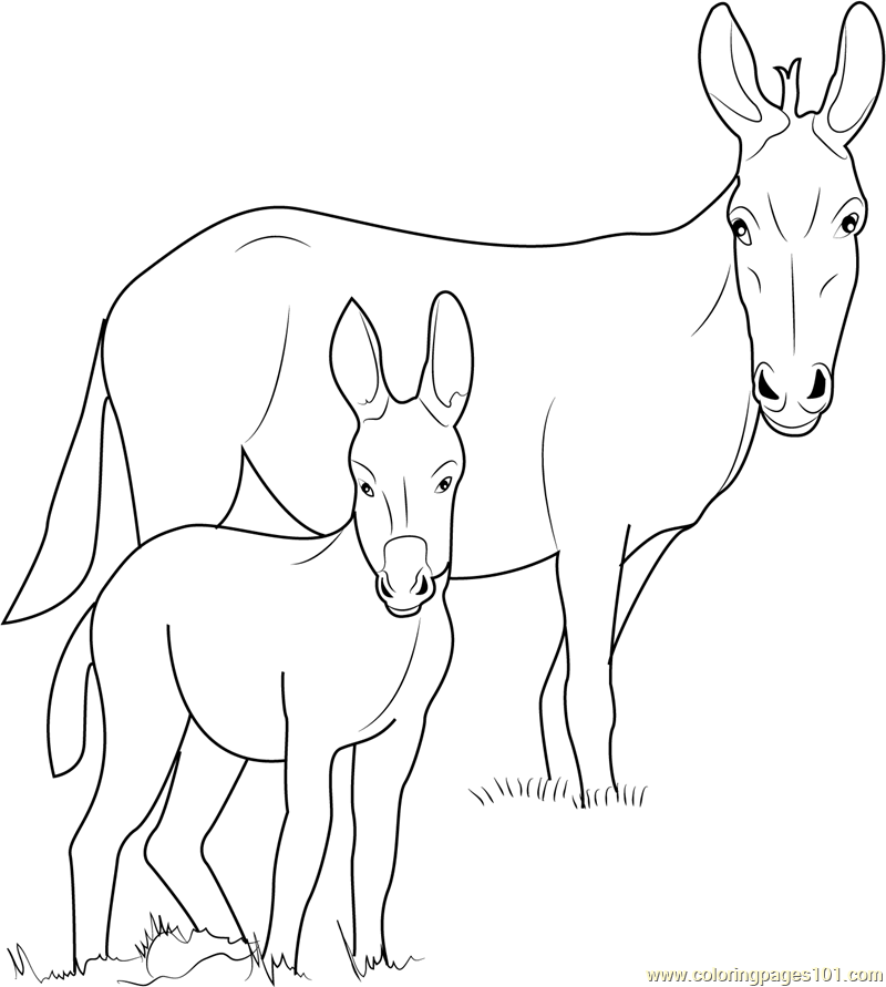 donkey colouring pages mule coloring pages kidsuki donkey colouring pages