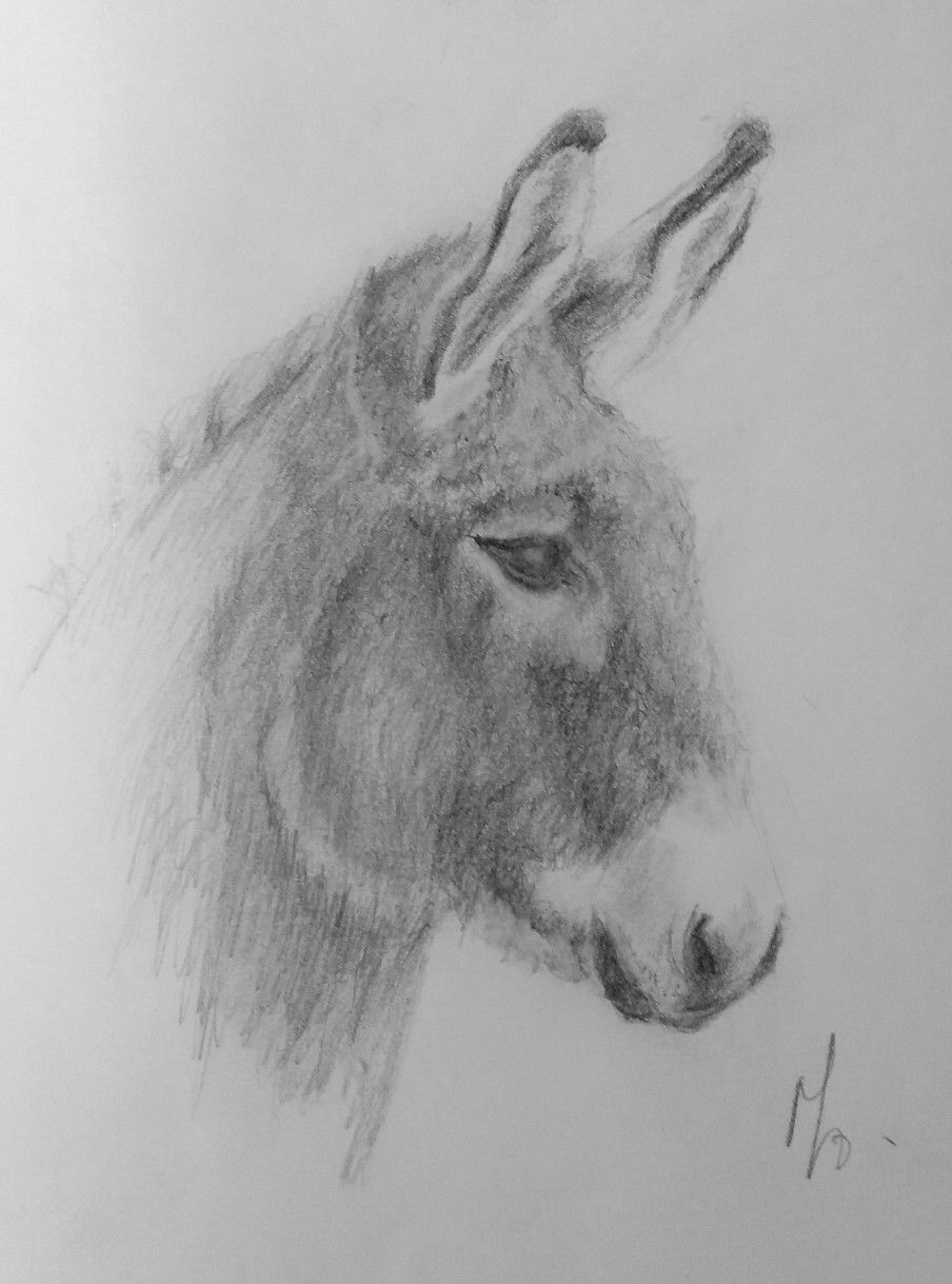 donkey drawing animals donkey drawing by mgl meiklejohn graphics licensing donkey drawing