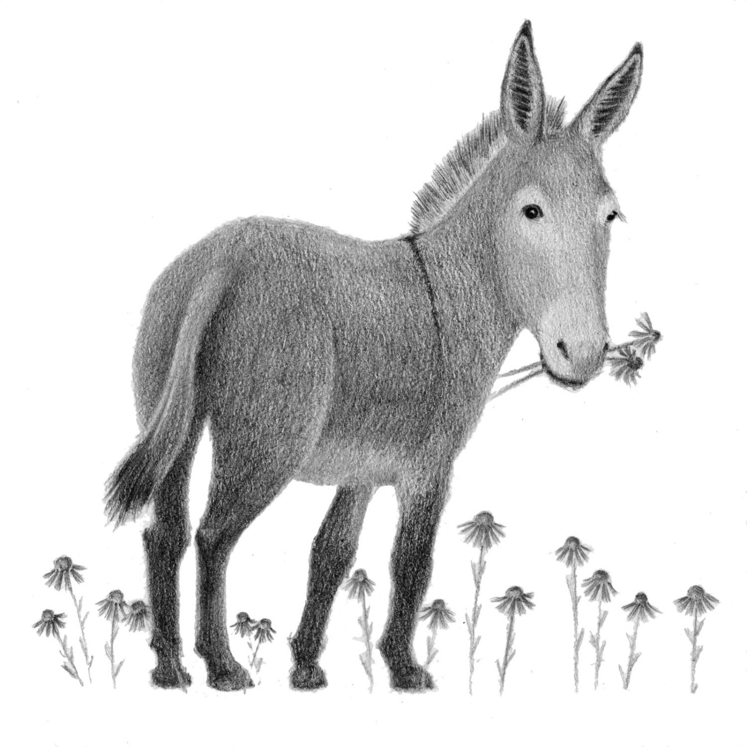 donkey drawing donkey friends drawing by gail finger donkey drawing
