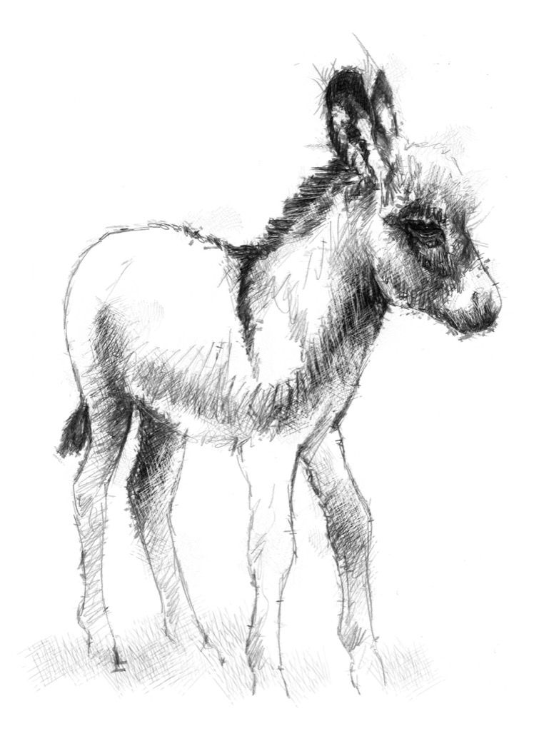donkey drawing donkey pencil drawing how to sketch donkey using pencils drawing donkey