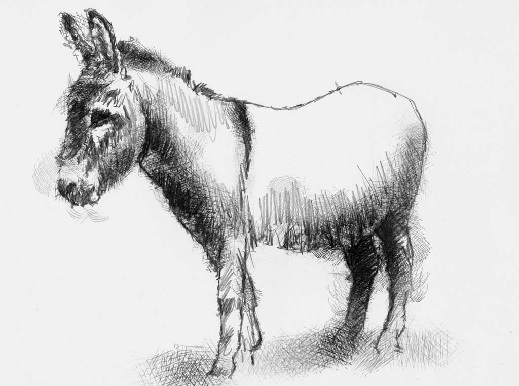 donkey drawing pin the tail on the donkey drawing free download on donkey drawing
