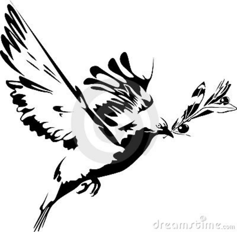 dove holding olive branch dove and olive branch stock images image 5977174 dove olive holding branch