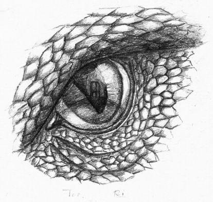 dragon eye coloring page coloring pages of dragon eyes tripafethna dragon eye coloring page