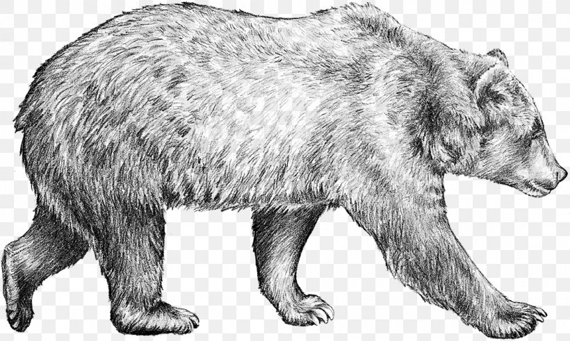 draw grizzly bear alert mom grizzly bear by bob patterson grizzly bear grizzly draw bear