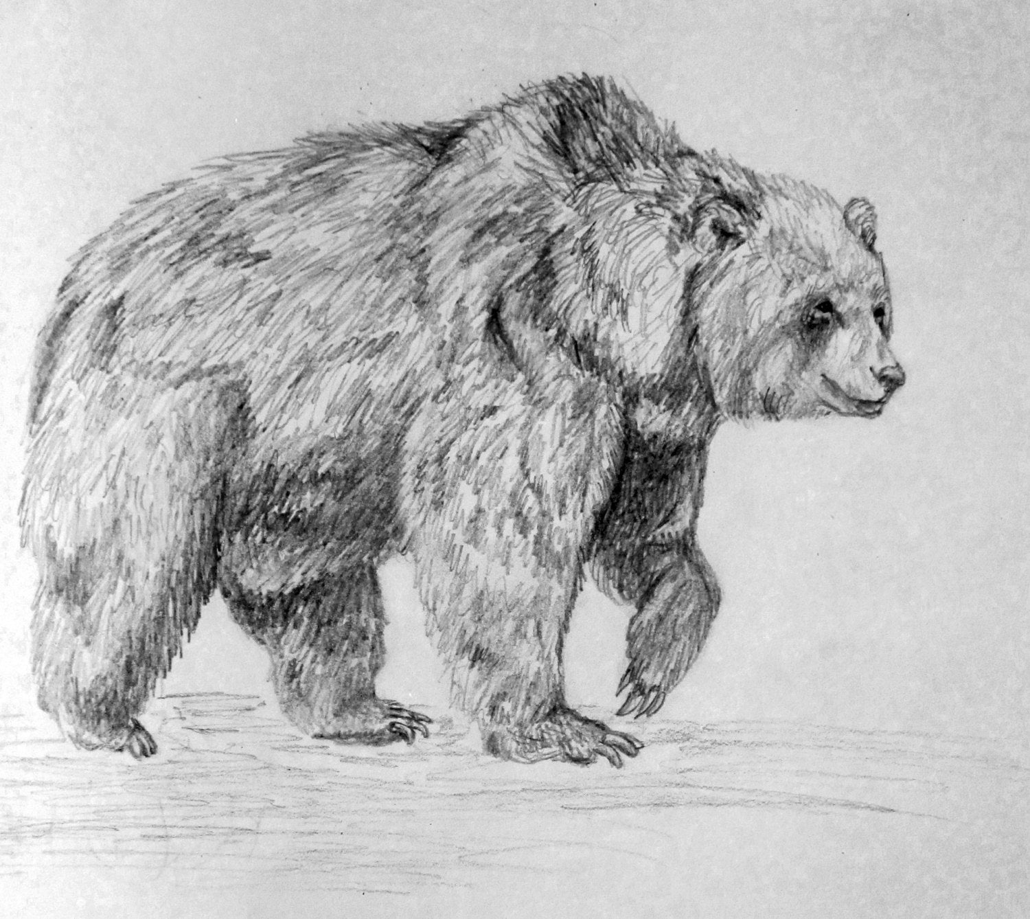 draw grizzly bear beautiful grizzly bear drawing bear paintings pencil grizzly draw bear
