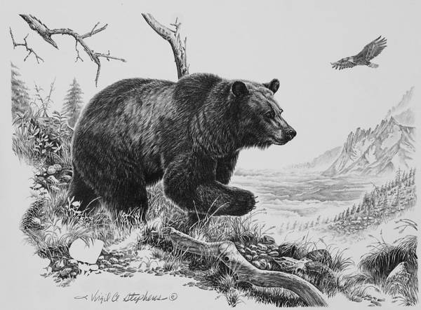 draw grizzly bear brown bear drawing grizzly bear sketch png 1110x665px grizzly bear draw