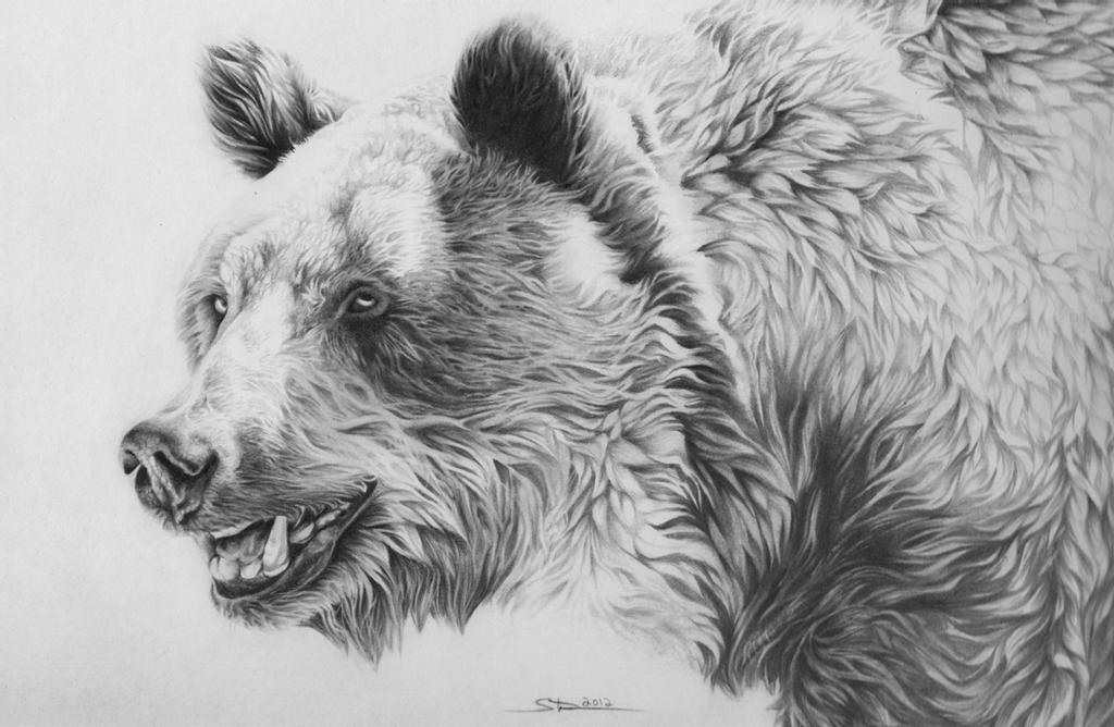 draw grizzly bear details about grizzly bear fishing limited edition print grizzly bear draw