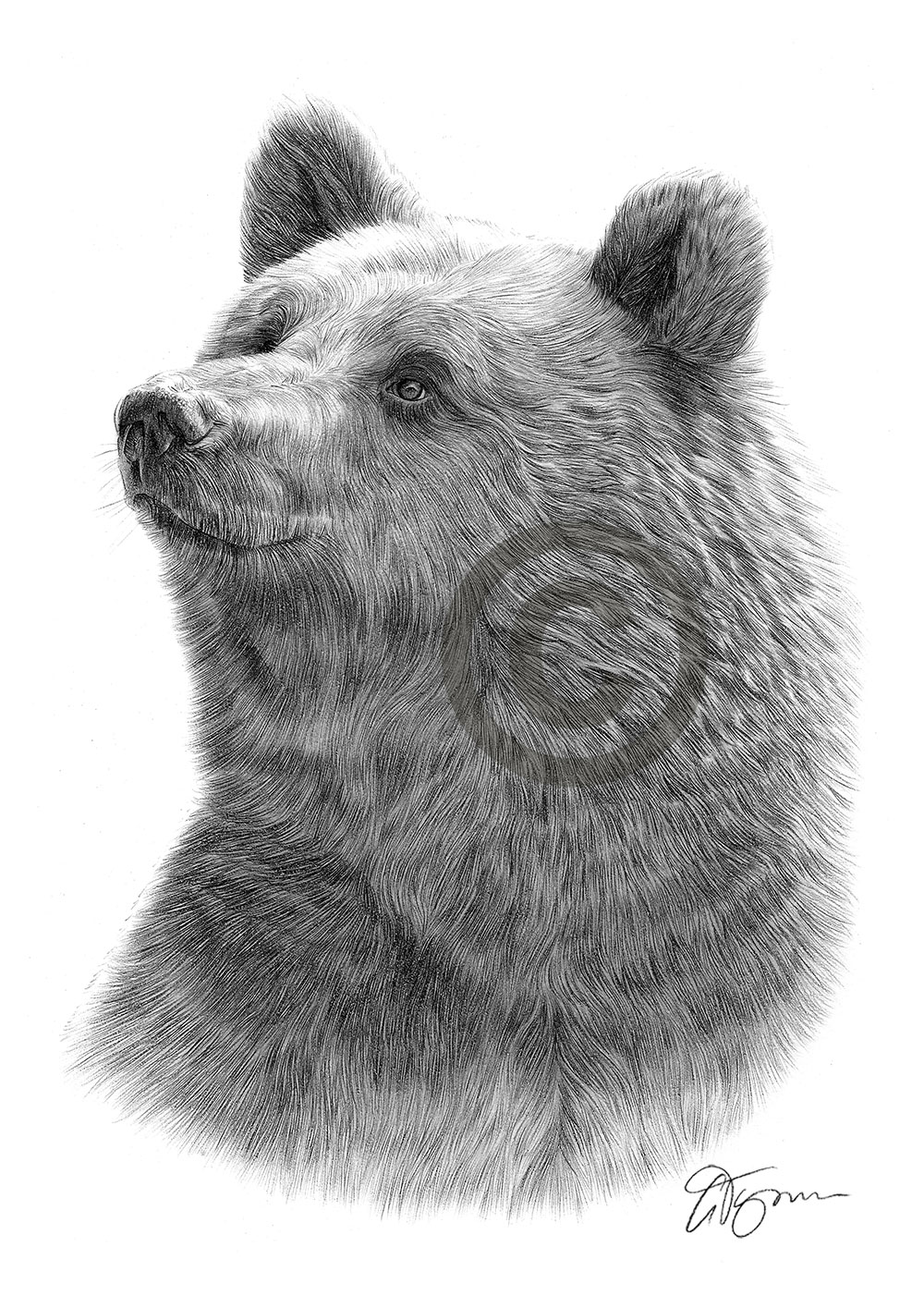draw grizzly bear draw grizzly bears pen and ink ideas for amy pinterest draw bear grizzly