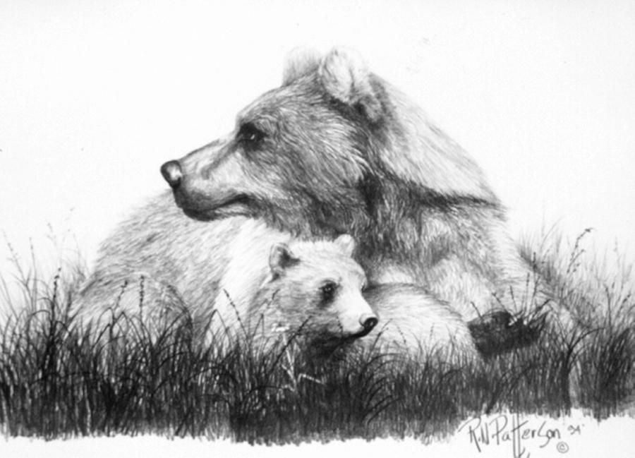 draw grizzly bear grizzly bear drawing by sharlena wood bear draw grizzly