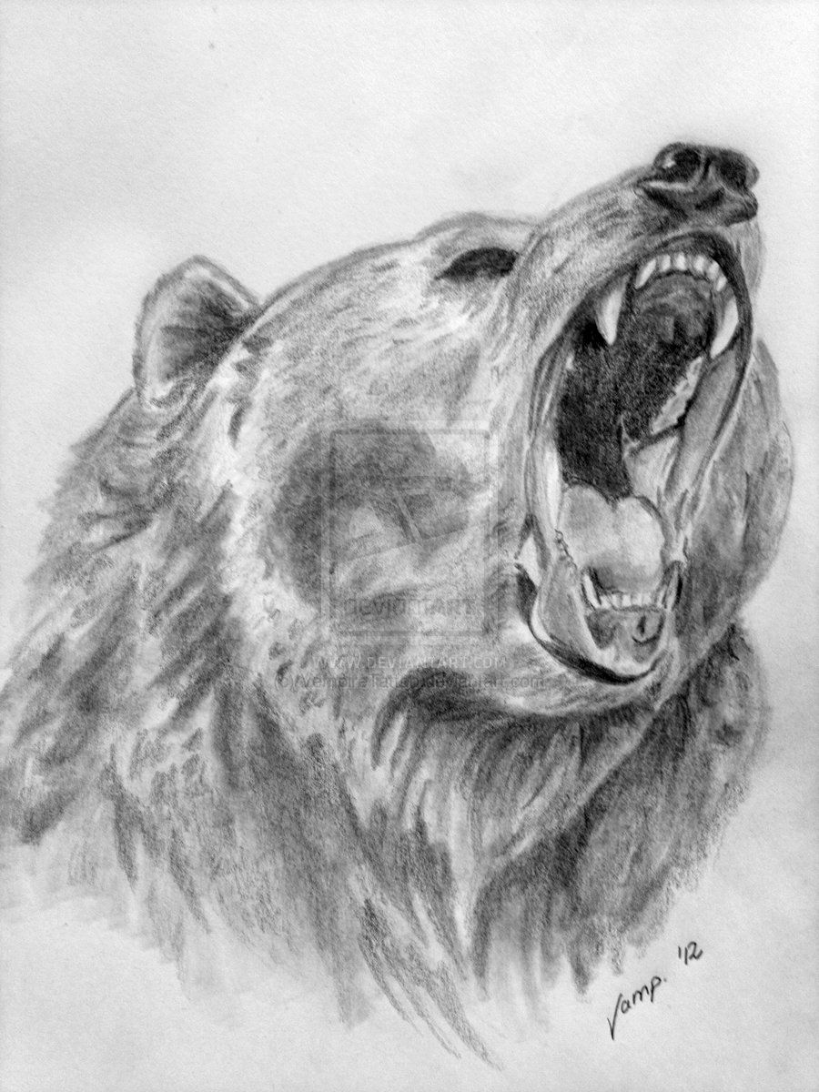 draw grizzly bear grizzly bear drawings fine art america bear draw grizzly