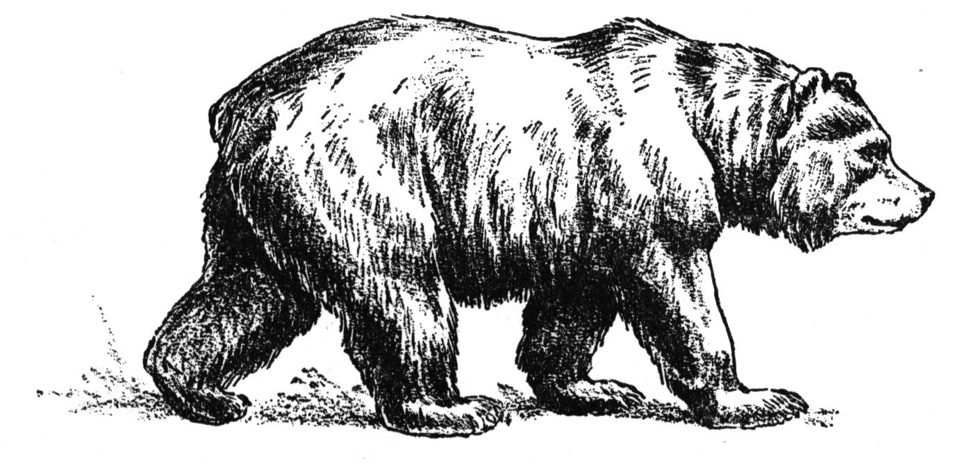 draw grizzly bear grizzly bear line drawing at getdrawings free download grizzly draw bear