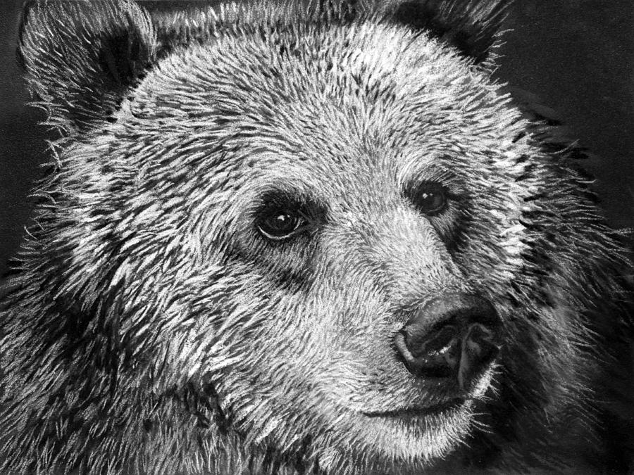 draw grizzly bear grizzly bear pen drawing by roberta ekman absoluteartscom bear draw grizzly