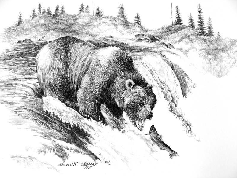 draw grizzly bear grizzly bear pencil drawing how to sketch grizzly bear draw grizzly bear
