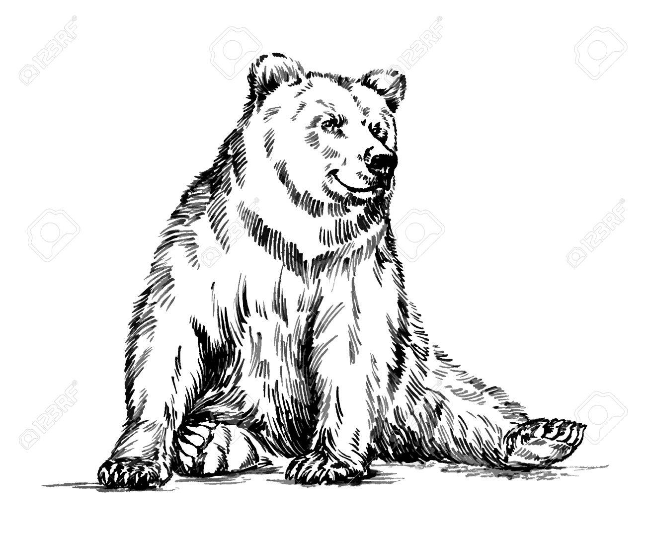 draw grizzly bear wildlifeartgrizzly bear standing bear drawing free bear grizzly draw