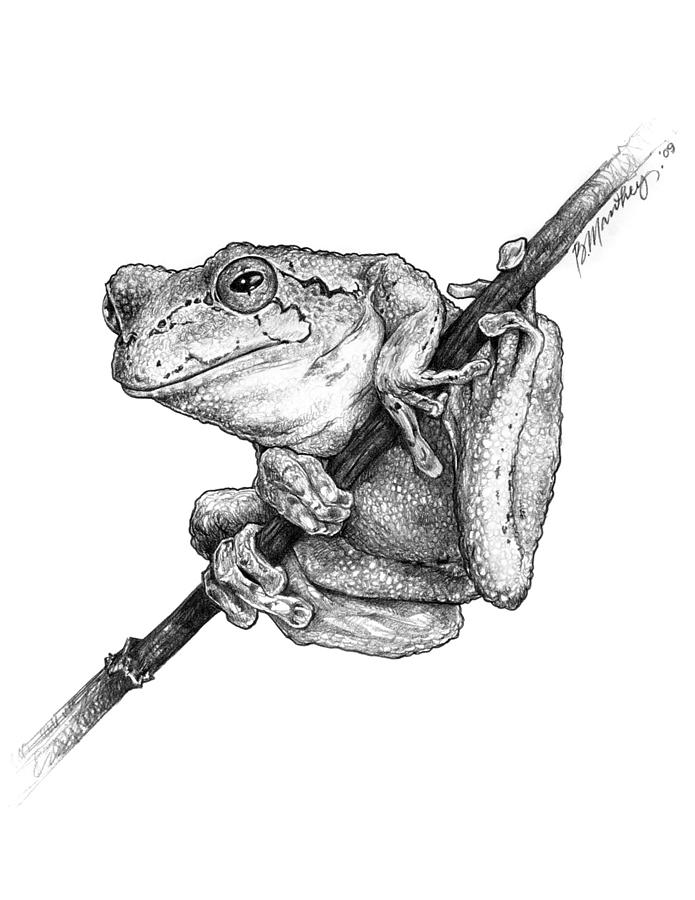 drawing frogs cartoon frog drawing at getdrawings free download drawing frogs
