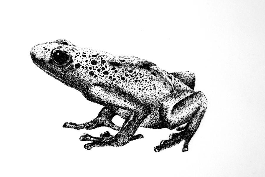 drawing frogs free 9 frog drawings in ai drawing frogs