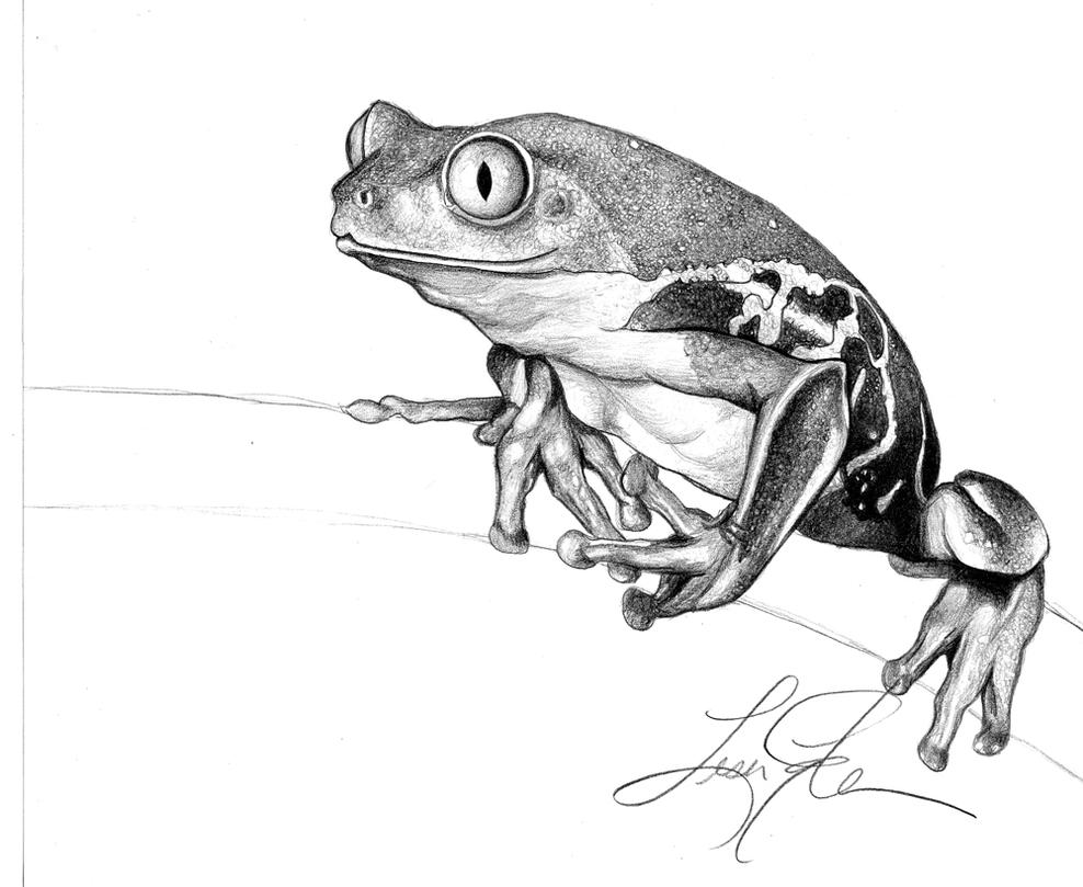 drawing frogs how to draw a frog step by step drawing frogs